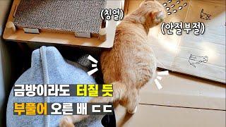 출산이 정말 임박했을 때, 평소와 다른 고양이의 행동