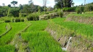 Sri Lanka,ශ්රී ලංකා,Ceylon,Beautiful Rice Paddy Terraces (05)