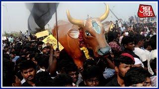 100 Shehar 100 Khabar: Centre Gives Nod To Tamil Nadu's Jallikattu Ordinance