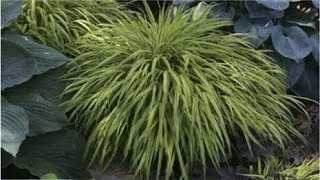 Four Variegated Plants We Love
