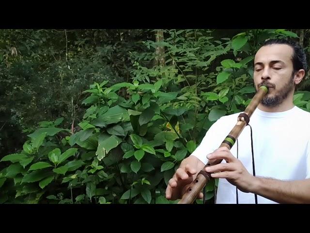 Flauta nativa caña de río D