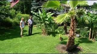 Palmy w Nowym Targu