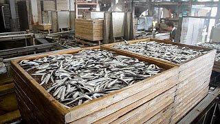 讃岐うどん支えるイリコ漁に同行 香川県・伊吹島 thumbnail