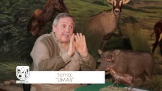 Umas - Coneff 2016