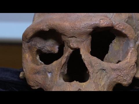 L'Homo Sapiens est né au Maroc