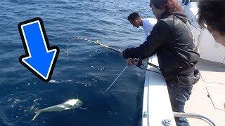 トミーが3日間かけてマグロを釣りにいった結果がすごかった!! thumbnail