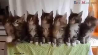 Still D.R.E - (Animals Cover Instrumental) Video