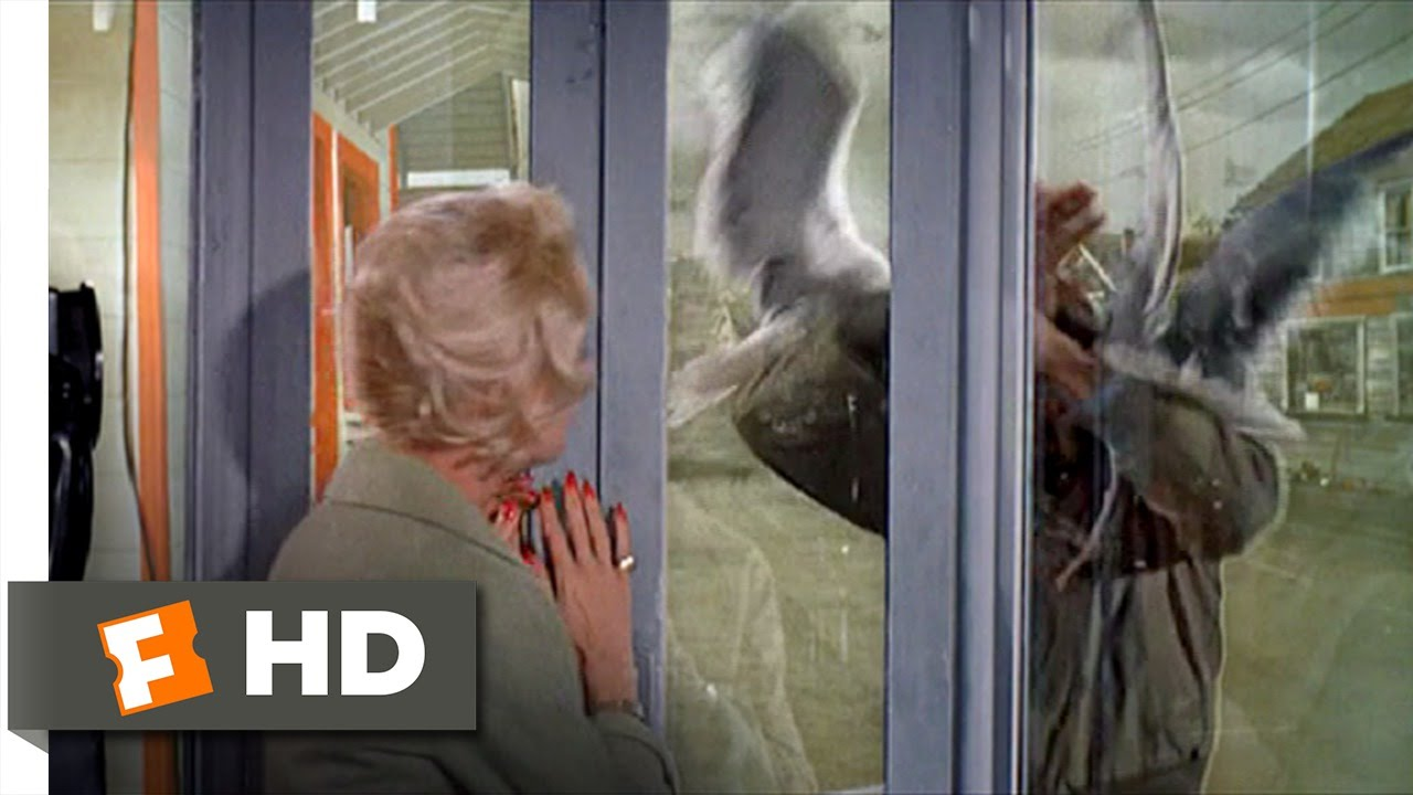 The Birds 8 11 Movie Clip Trapped In A Phone Booth 1963 Hd