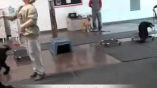 Dog Training Classes Las Vegas - Distraction And Motivation