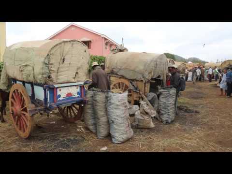 Madagascar Antsirabe Marché au charbon / Madagascar Antsirabe Coal Market
