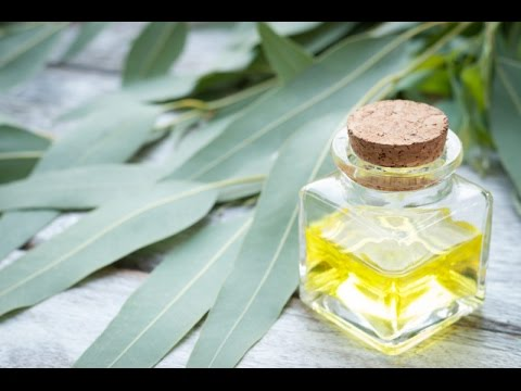Eucalyptus medicinal uses for Diabetes and bacterial infections: