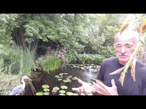 Creare un laghetto in giardino buzzpls com for Creare laghetto artificiale
