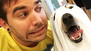 CUTE GHOST DOGS! (8.29.14 - Day 1948)