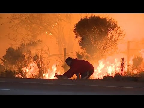 Hero Rescues Wild Rabbit From Raging California Fire