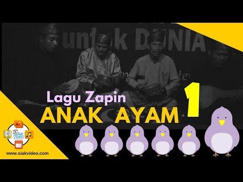 Live LAGU ZAPIN ANAK AYAM. . . . 1