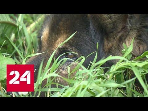 Тайная смерть домашних животных: кто травит собак кинолога Россия 24