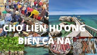 Đông vui CHỢ LIÊN HƯƠNG, Cổ Thạch: Rất nhiều loài cá lạ - Biển Cà Ná đẹp ná thở - Linh Sơn cổ tự