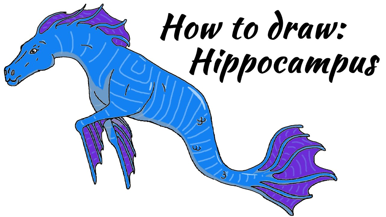 how to draw a hippocampus mythology youtube