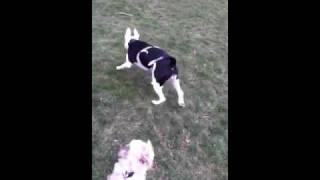 My Dog Playing Fetch!
