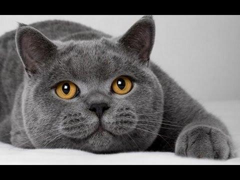 USA КОШКИ НА ПОДИУМЕ (выставка котов различных пород)