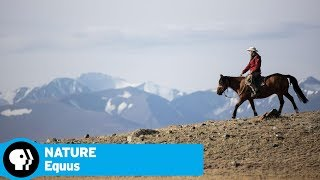 """Part 1: Origins Preview   Equus """"Story of the Horse""""   NATURE   PBS thumbnail"""