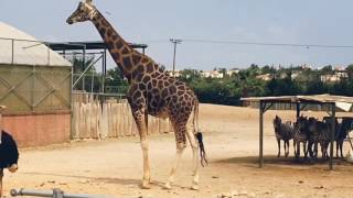 Αττικό Ζωολογικό Πάρκο || Maraki_Xr