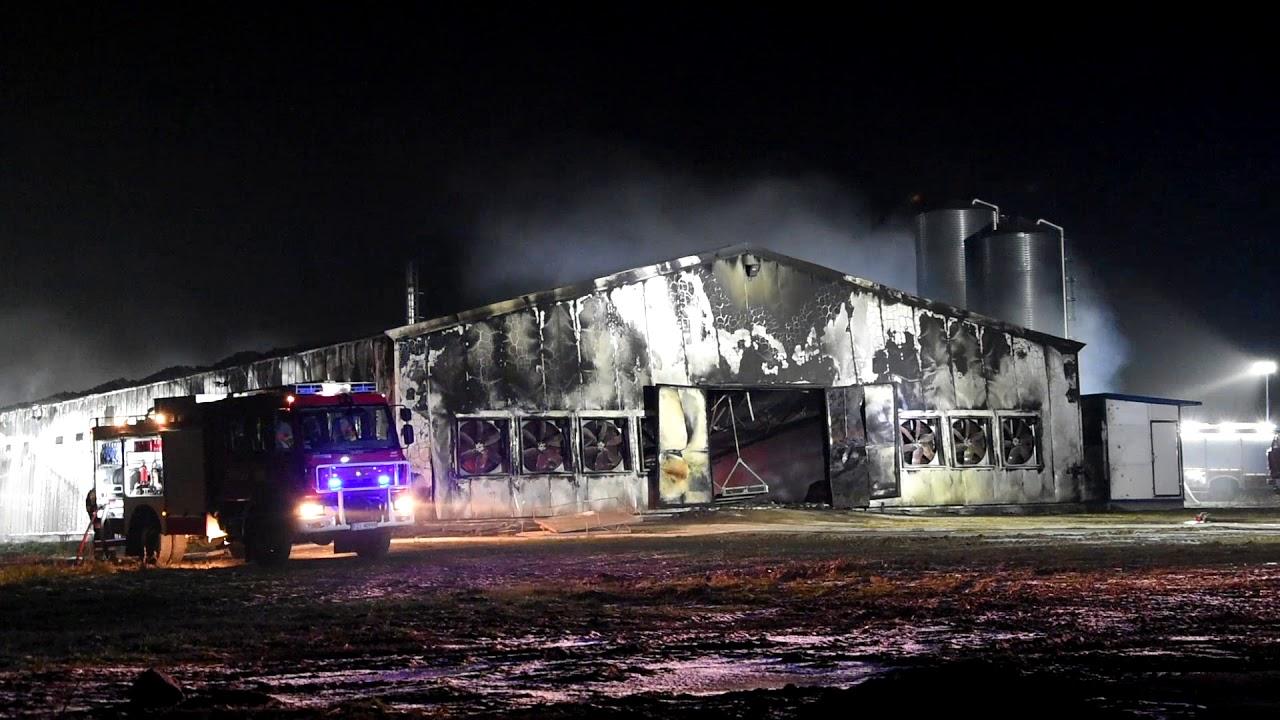 Potężny pożar kurnika w Swarzynicach koło Sulechowa. Około 32 tys. kurczaków spłonęło żywcem