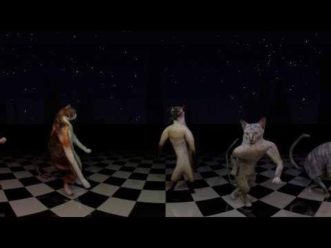 Dancing Cats 360 VR!