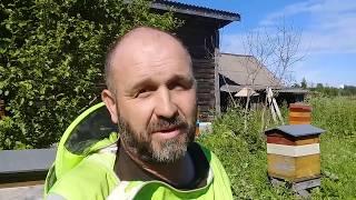 Можно ли заработать на пчеловодстве?