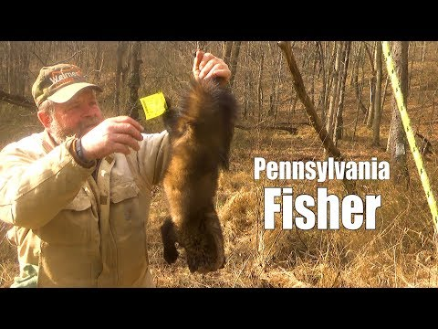 Trapping The Fisher In Pennsylvania