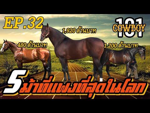 Cowboy101  ม้าที่แพงที่สุดในโลก !!! EP.32