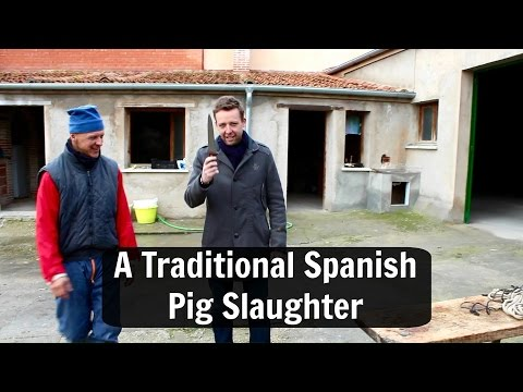 La Matanza: A Traditional Spanish Pig Slaughter