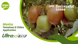 Successful cases – Tomate y Chiles, Ultrasol FEP – México