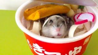 きつね じゃないよ、ハムスターだよ♪|ω・。)④『もっときつぃね、ふとん』Noodle hamster? thumbnail