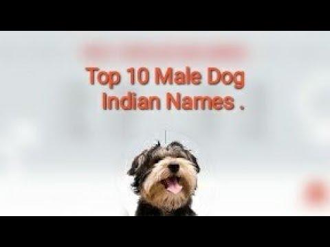 Top 10 Indian Dog Names  || Harshit Kumar ||