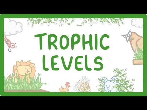 GCSE Biology - Trophic Levels - Producers, Consumers, Herbivores & Carnivores  #85