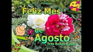 Feliz Mes De Agosto Con Hermosos Mensajes Para Ti , Bienvenido Agosto 🌹🌹🌹💌💖😘