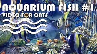 FISH VIDEO FOR CATS - Aquarium Fish #1. Entertainment Video for Cats to Watch.