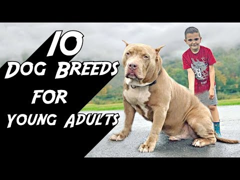 10 Dog Breeds for Young Adults
