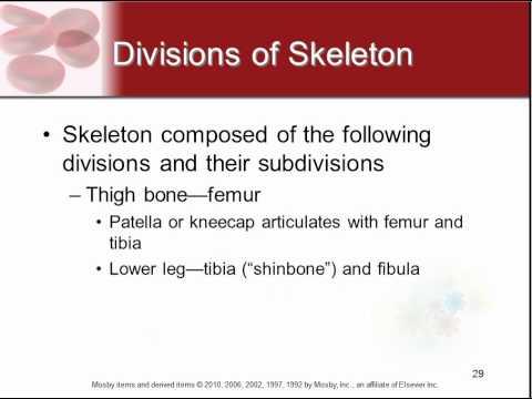 Chapter 7 - Skeletal System