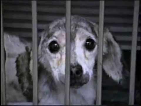 experiments on animals report Top five shocking animal experimentation facts web accessed march 3, 2015 2 people for the ethical treatment of animals animal testing is bad science: point.