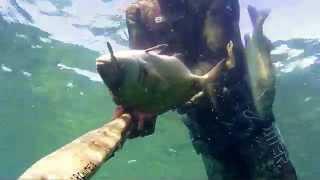 SPIGOLE DAL NULLA...E NON SOLO.. pesca-sub