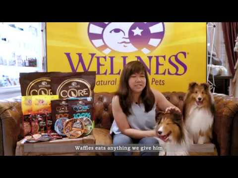 Wellness Top 10 Breeds: Shetland Sheepdog