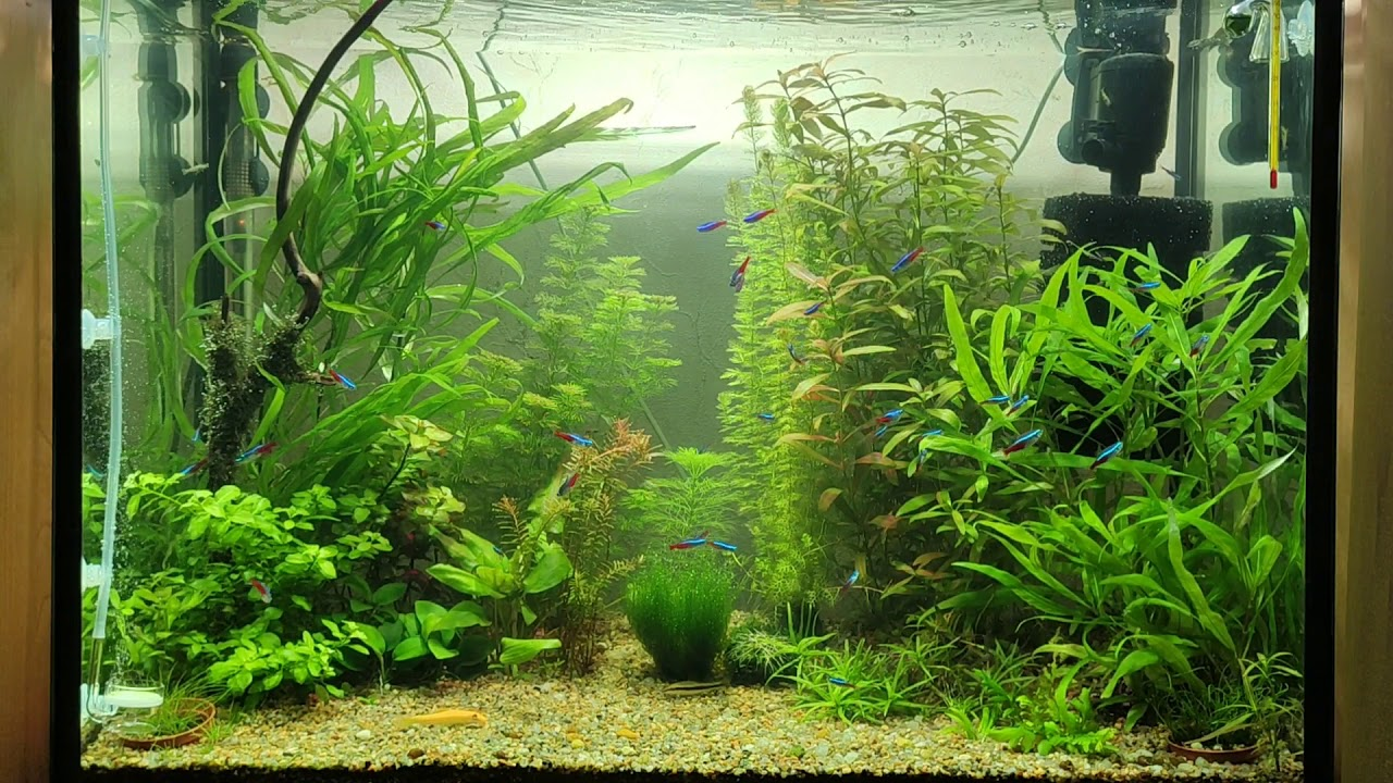 Aquarium, relax, fish, music, relaxation, sticky - YouTube