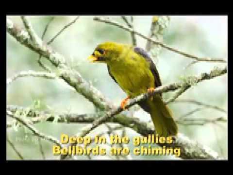Carol of the Birds : Australian Christmas Carol sung by Bucko & Champs