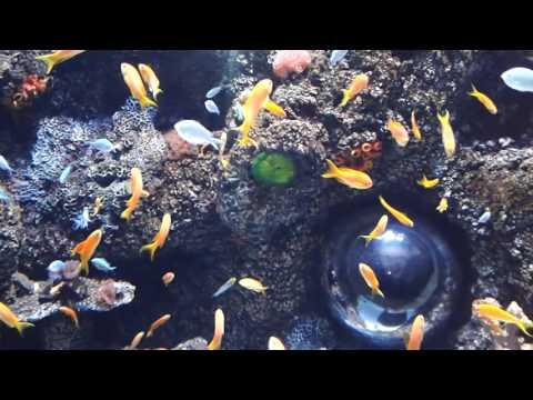 Aquarium Istanbul Forum Part 1