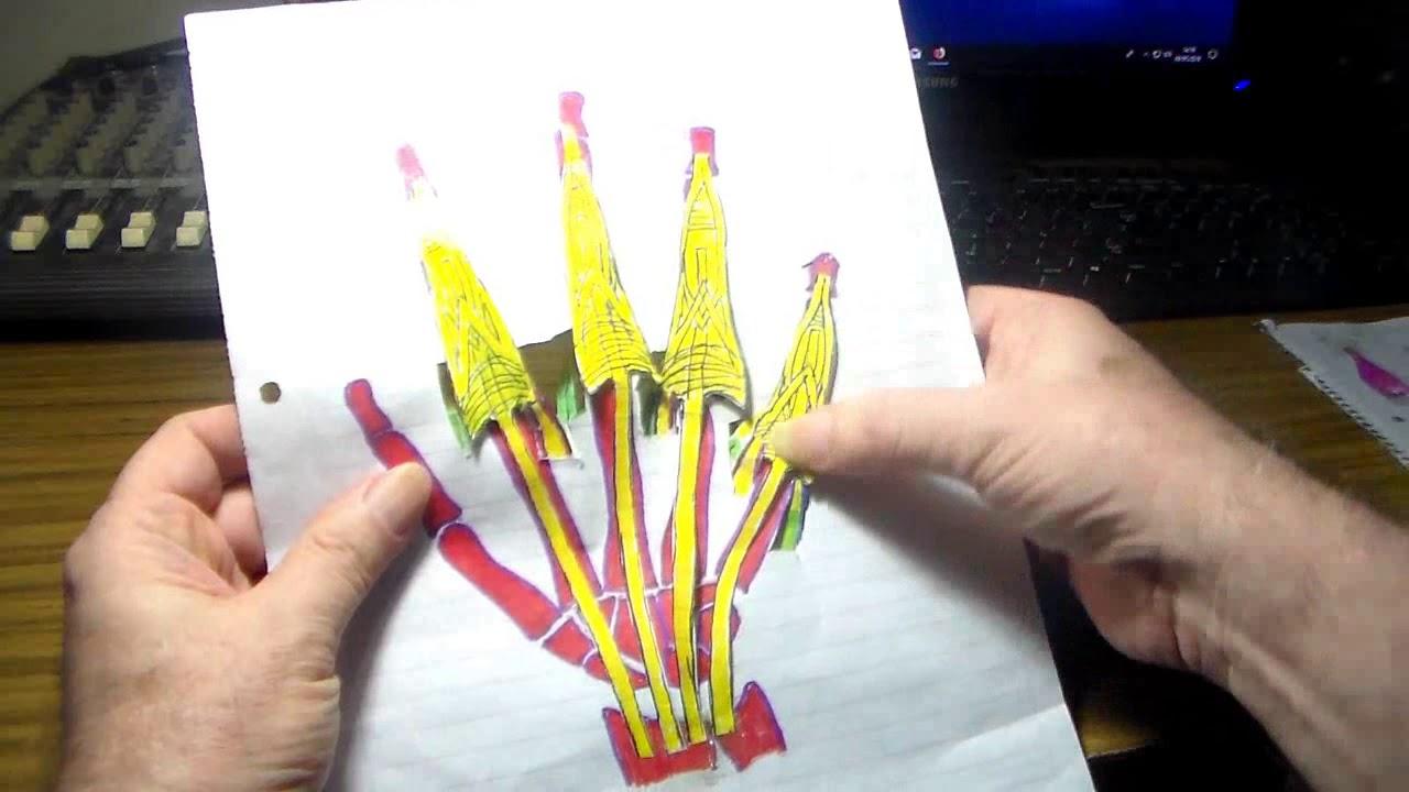 Anatomia p-guitarristas, extension de los dedos 2º parte por CRGomez ...