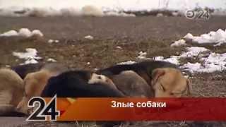 Агрессивная стая собак держит в страхе жителей поселка ГЭС в Набережных Челнах