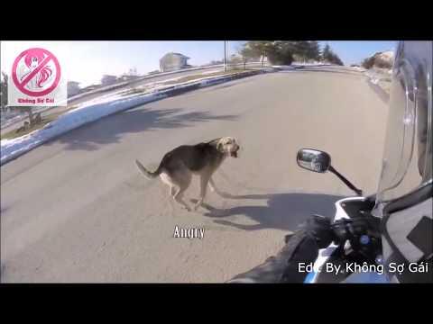 Những Pha Tai Nạn Thương Tâm Do Chó Thả Rông Bất Ngờ Phi Ra Ngoài đường