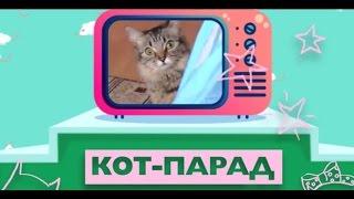 Кот парад  Выпуск №1